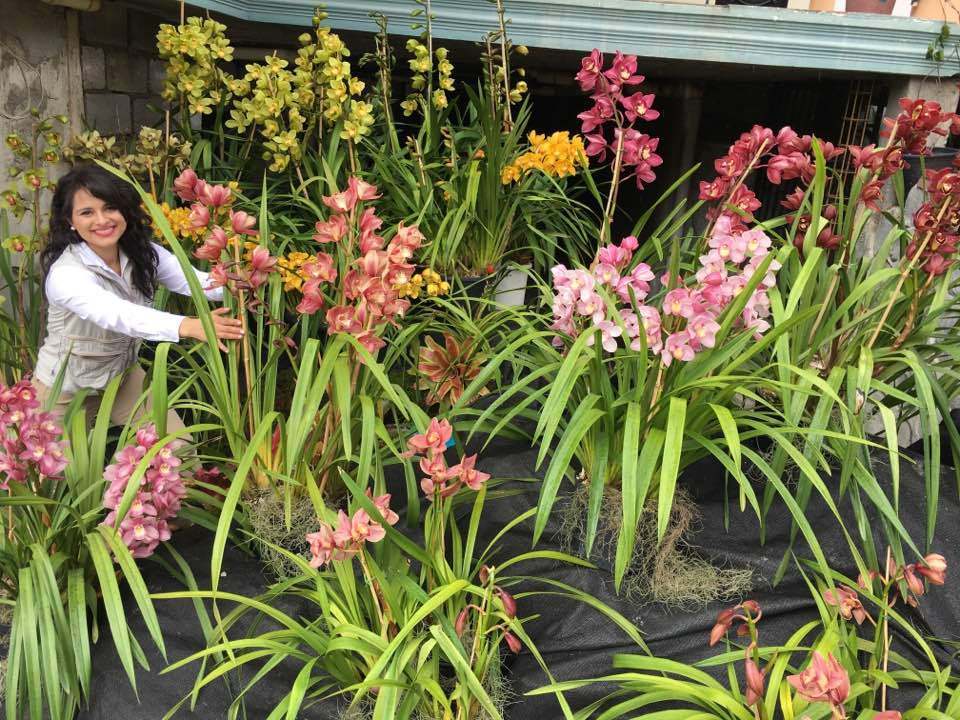 Cymbidium_display